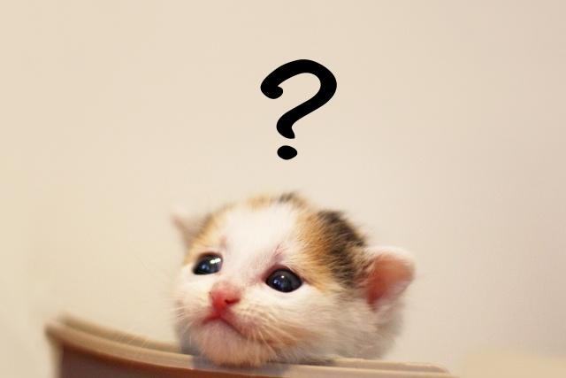 ケセランパサランの正体とは。生き物?化粧品?販売所もある?値段も アイキャッチ用