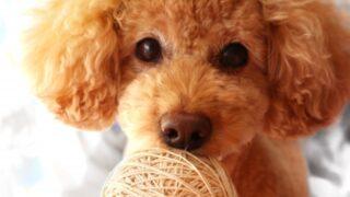 富士急ハイランドで犬とアトラクションに乗れる?料金、一時預かりもアイキャッチ用