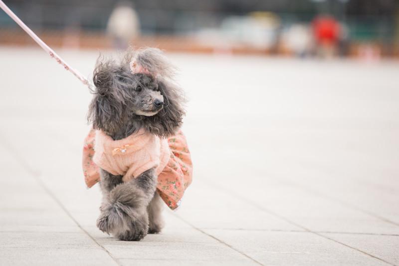 富士急ハイランドで犬とアトラクションに乗れる?料金、一時預かりも2