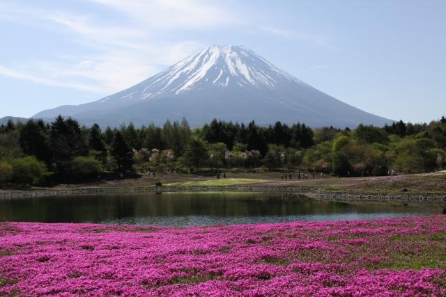 富士芝桜まつり2021はいつから?アクセス方法は?駐車料金、入場料も1