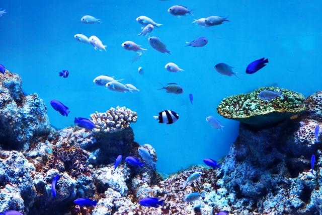 浅虫水族館の2021年イルカショーや行き方は?お弁当、海鮮丼がある?1