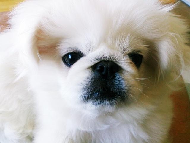 石田ニコルの両親、兄弟姉妹の家族構成がすごい?犬や猫も飼ってる?2